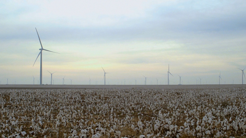 Organic cotton fields in Texas. Still image from The True Cost